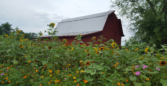 The Nourishing Farmgirl Red Barn